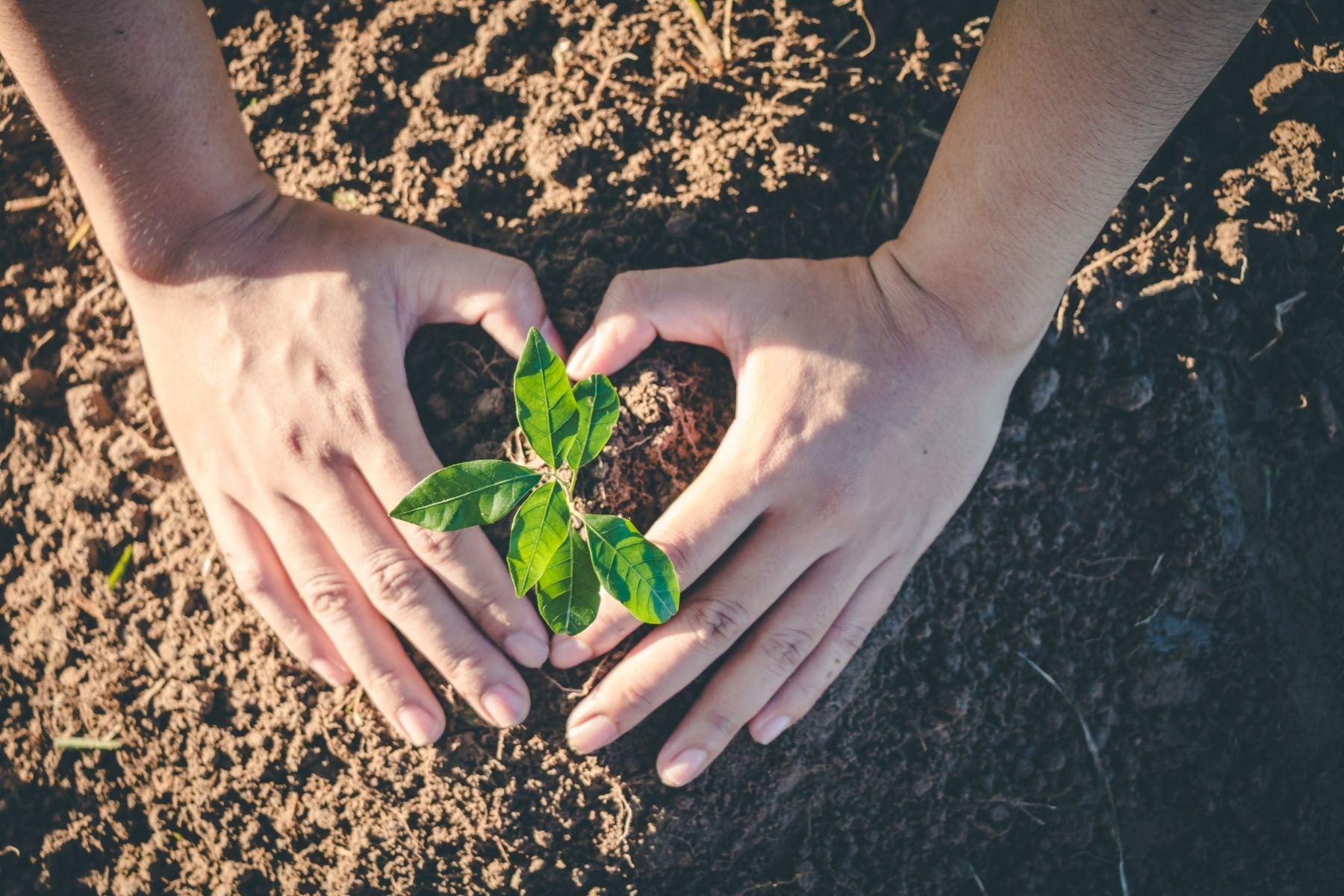 Reduzierung der CO2-Emissionen – Berechnung unseres Carbon Footprints